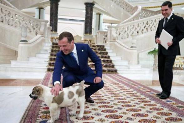 Մեդվեդևը ցուցադրել է ալաբայա շան ձագին, որը նրան նվիրել Է Թուրքմենստանի նախագահը