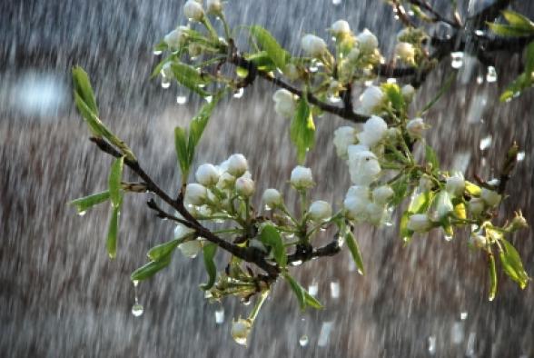 Մարտի 25-ի ցերեկը, 28-30-ը քաղաքի առանձին հատվածներում հնարավոր է կարճատև անձրև և ամպրոպ