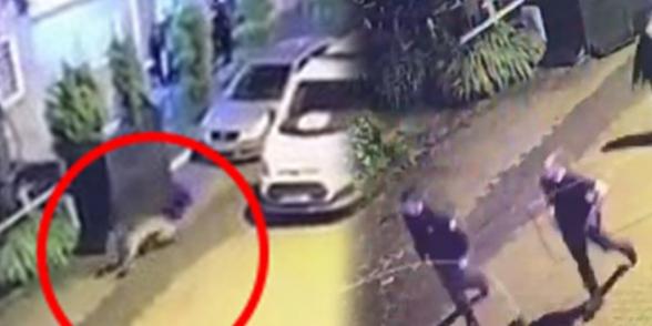 Թուրքիայի Արդվին նահանգում ոստիկաններն ընկել են արջի ետևից (տեսանյութ)