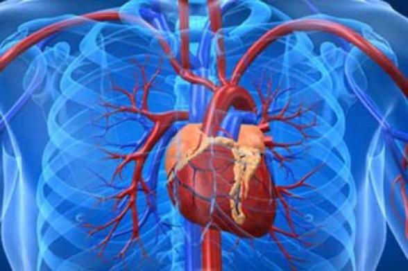 Սեպտեմբերի 29-ը Սրտի համաշխարհային օրն է
