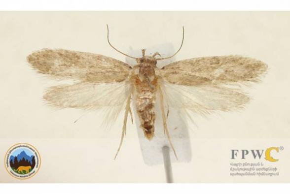 В Армении обнаружен неизвестный науке вид насекомых