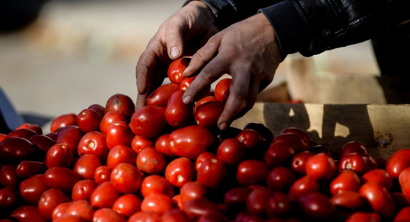 А им все равно: турецкие помидоры по-прежнему привозят на оптовые рынки Армении