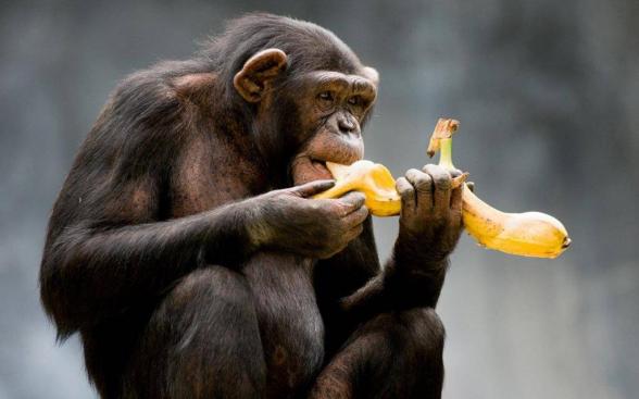 Революционный банан и рай для погосов