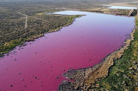 Արգենտինայի հարավում ծովածոցը վարդագույն է դարձել